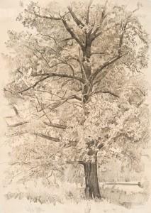Рисунок дерево. 2012. 90х60